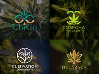 creative cannabis hemp weed marijuana cbd oil logo web lettering icon animation vector logo design illustrator typography minimal illustration branding
