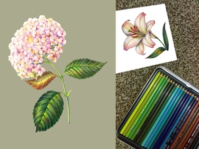Flowers colored pencils.