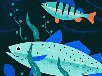 Baltic Sea drawing illustration baltic sea fish