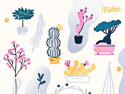 House plants drawing illustration cactus sakura houseplants plants
