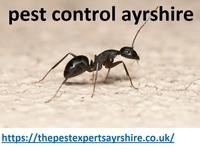 pest control glasgow