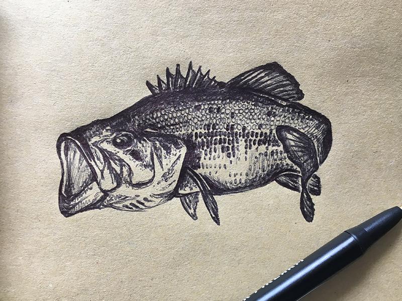 If you can't catch 'em, draw 'em. pen illustration fish illustration bass illustration bass