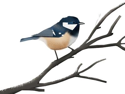 Coal tit illustration bird illustration bird sikorka sosnówka
