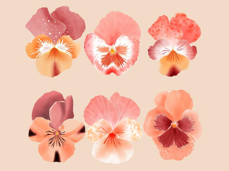 pansies - floral illustration