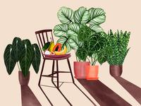 Plant gang shadows room fruits plants house plants freelance illustrator illustrator botanical illustration botanicalart illustration digital illustration