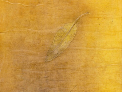 yellow leaf texture on paper with natural colors