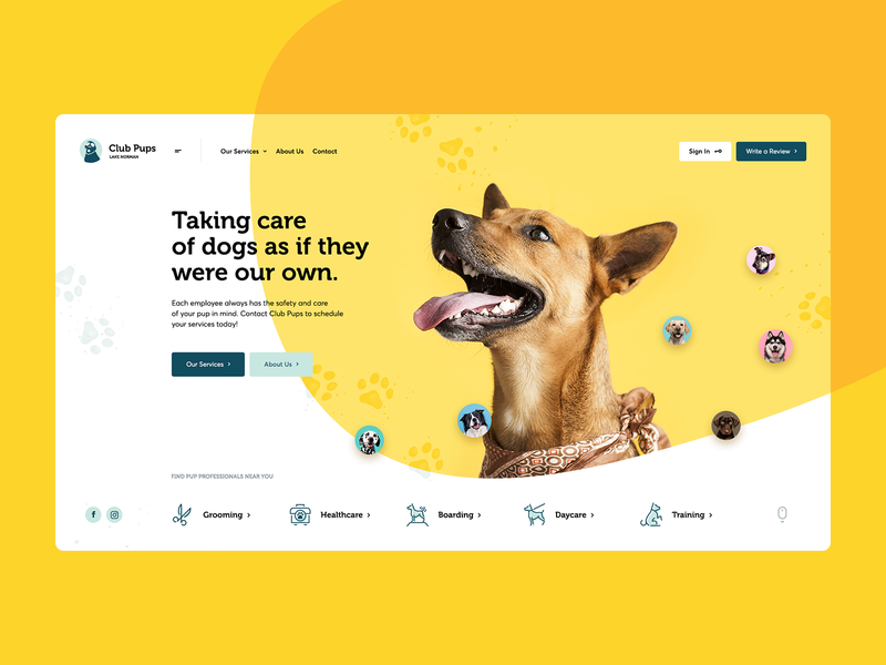 Club Pups 🐶 poland agency design illustration onepage pets dogs intro hero landingpage ux ui webdesigner webdesign website web