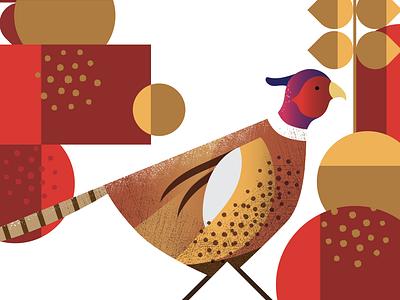 Pheasant Illustration on white brand branding labelling label packaging pheasant nature illustration bird