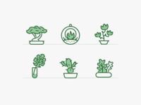 Plants & Pots