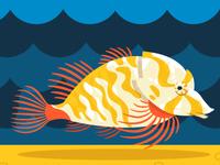 Grunt Sculpin—Seattle Aquarium 2016