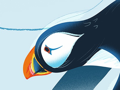 Atlantic Puffin sketch brush sketch airbrush drawing texture bird ngo non-profit zoo illustration cartoon animal