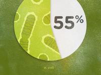 E. coli pie