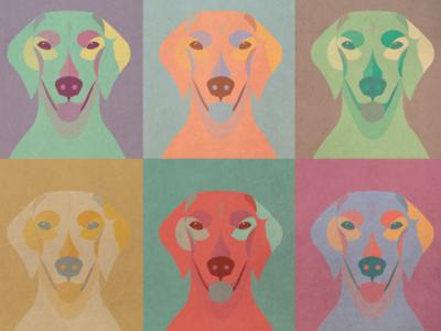 Golden Pop puppy profile shading dog analysis comparative retriever golden