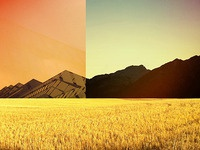 Experimental landscapes