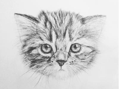 Cat Drawing By Ioan Decean - Dribbble