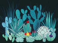 Cacti Family