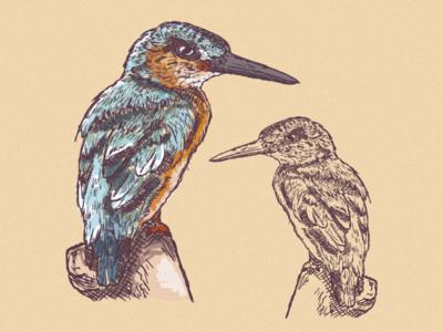 Little birds 🐦✨