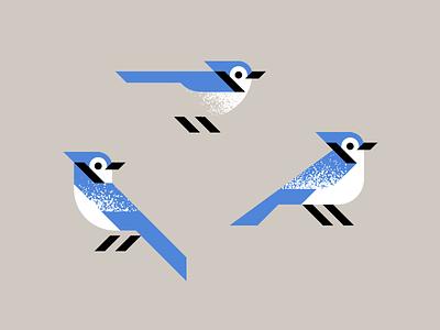 Tweedle-Dee bluejay blue jay art design jay bird illustration
