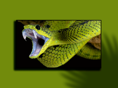 SNAKE photoshop graphic design digital painting digitalart digital artwork