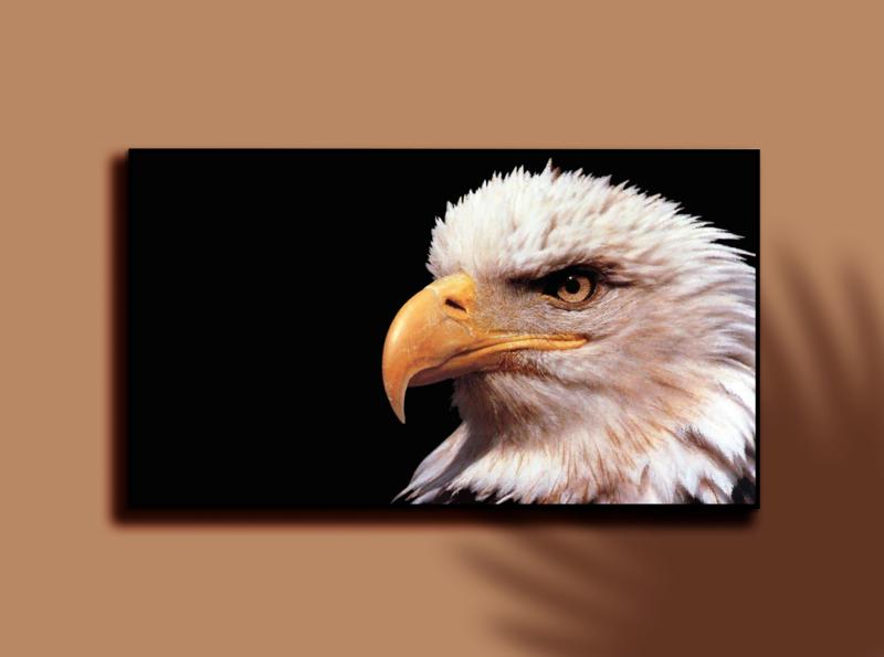 EAGLE photoshop graphic design digital painting digitalart digital artwork