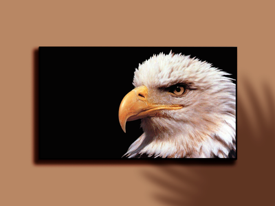 EAGLE photoshop graphic design digital painting digitalart digital artwork