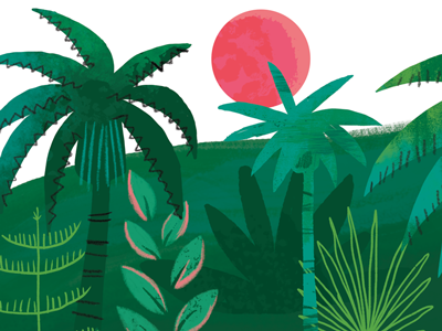 Jungle Test jungle trees palm tree sun plants ferns leaves illustration book