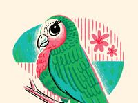 Lady parrot