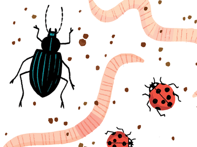 Beetles And Worms dirt beetle ladybug worms insects bugs