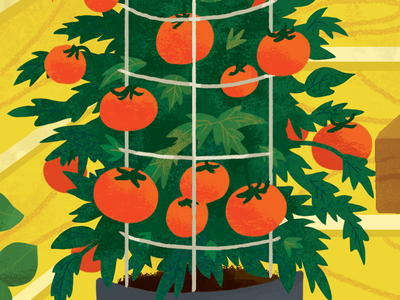 Tomato Plant illustration plant gardening garden food vegetable tomato