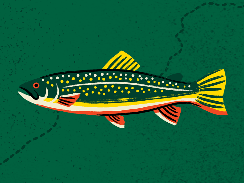 Brook Trout fishing map illustration trout fish