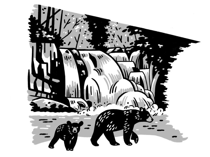 Abrams Falls WIP ipad pro procreate nature wilderness waterfall bears national parks