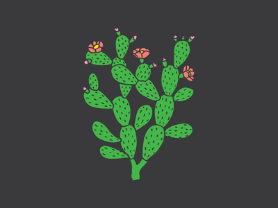 Cactus drawing nature green prickly pear plant cactus