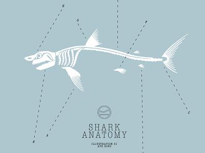 Shark Anatomy cape clasp cape cod illustration shark week marine life ocean drawing anatomy bones shark
