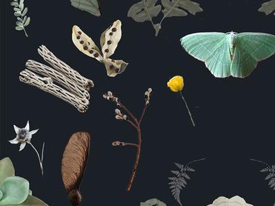 Sara June. flowers leaves seeds forest desert moth collage branding
