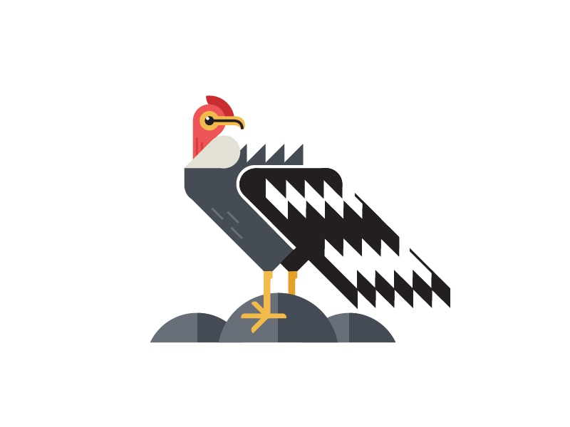 Andy the andean condor by bradley f edwards dribbble for Colores condor