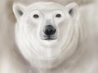 Polar Bear wwfrussia wwf illustration