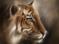 Amur Tiger wwfrussia wwf illustration