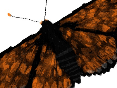 Butterfly drawing black orange halftone illustration hand drawn wings insect butterfly
