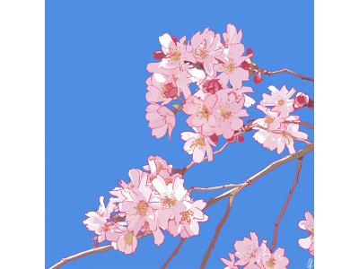 Visual Journalism: Cherry Blossoms visual journalism graphic design digital art illustration art print illustration design