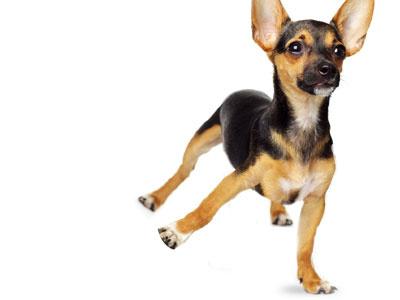 Dancing Dog photoshop manipulation advert dog