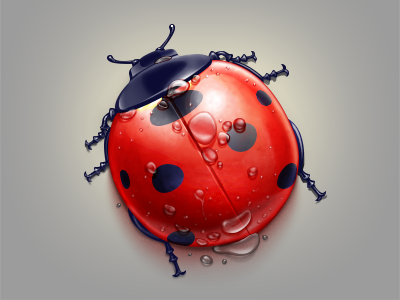 Ladybird icon ladybird water red drop