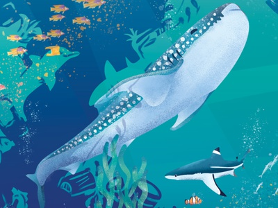 MyMuesli Ocean package illustration cut11 shark illustration adobe illustrator coral reef fish shark whale shark underwater packaging save the ocean package illustration package design animal illustration plastic pollution ocean life ocean art ocean illustration ocean vector illustration illustration digital illustration