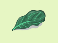 Leaf illustration