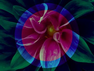 flower power symmetrical symmetry flower geometric
