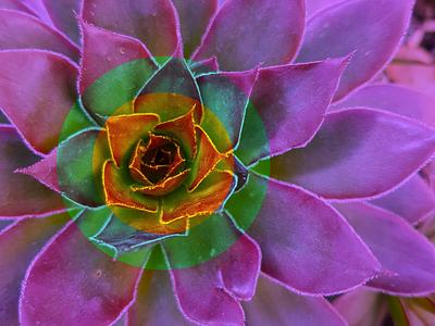 plant power nature blending modes symmetrical symmetry geometric plant