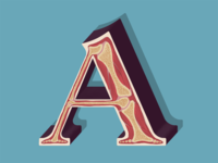 A is for Anatomy