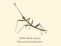 Selfie Stick Insect
