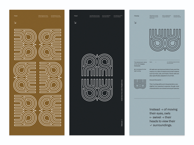 layout and branding exploration