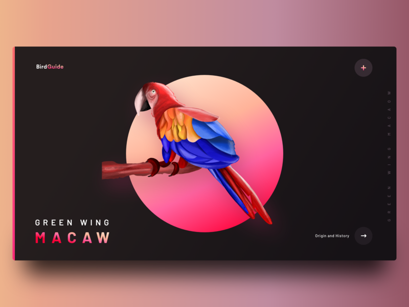 Bird Guide web exploration (Dark mode) battery night dar illustration guides trend gradient landing macaw procreate ipad neel sharma prakhar bird illustration application website guide view bird