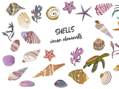 Shells sketch beach holiday sea vector illustration